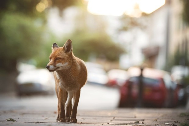 What the Lockdown Could Mean for Urban Wildlife